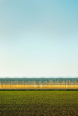 Greenhouse in Westland,  area with the highest concentration of greenhouses in Netherlands - p429m1557425 by Mischa Keijser