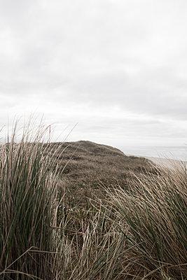 dune 2 - p1095m1515725 by nika