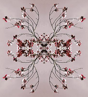 Blütencollage - p415m1460831 von Tanja Luther