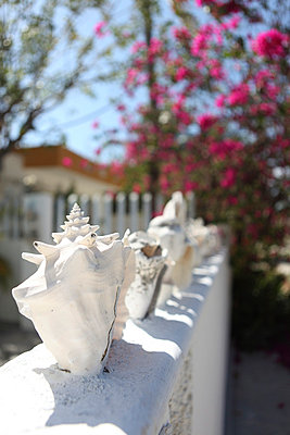 Fence decorated with shells - p045m777550 by Jasmin Sander