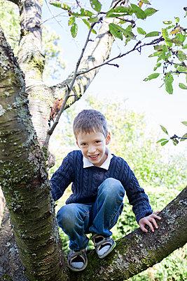 Kleiner Junge im Baum - p1308m1516559 von felice douglas