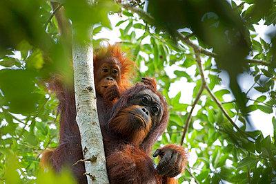 Borneo - p6520498 by Mark Hannaford