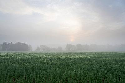 Sonnenaufgang - p7980146 von Florian Löbermann
