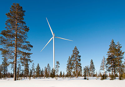 Wind turbine and pine trees in winter scenery - p1079m1042428 by Ulrich Mertens