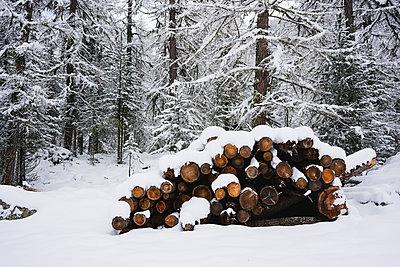 Wood covered by snow, Engadin, Switzerland - p300m2155630 by Michela Ravasio