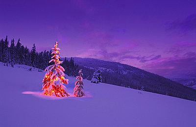 Christmas Tree Illuminated At Night - p44210318f by Carson Ganci