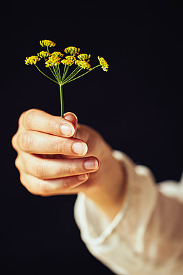 Woman holding wild flower - p968m2020232 by roberto pastrovicchio