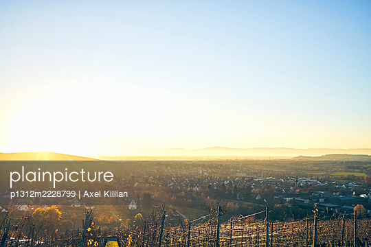 Germany, Vineyard in autumn - p1312m2228799 by Axel Killian
