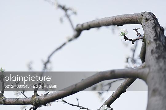 Erste Blüten im Frühling - p212m889943 von Edith M. Balk