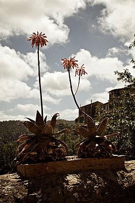 Bergdorf auf Mallorca - p1065m1183390 von KNSY Bande