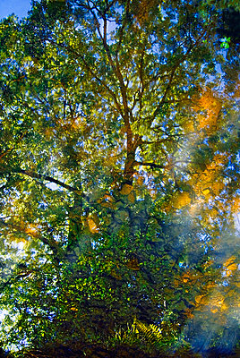 Abstract view of sunlight through trees - p1072m828898 by chinch gryniewicz