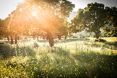 Summer - p936m939713 by Mike Hofstetter
