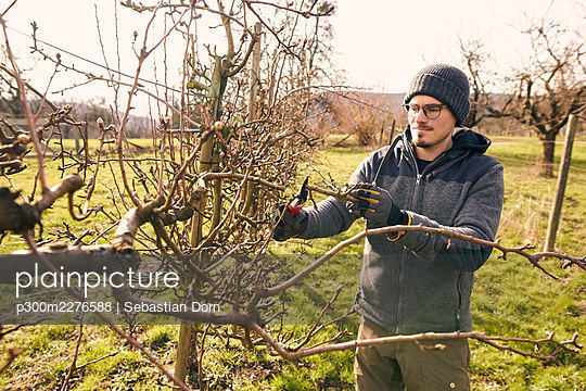 Farmer cutting branch of bare tree with pruning shears on sunny day - p300m2276588 by Sebastian Dorn
