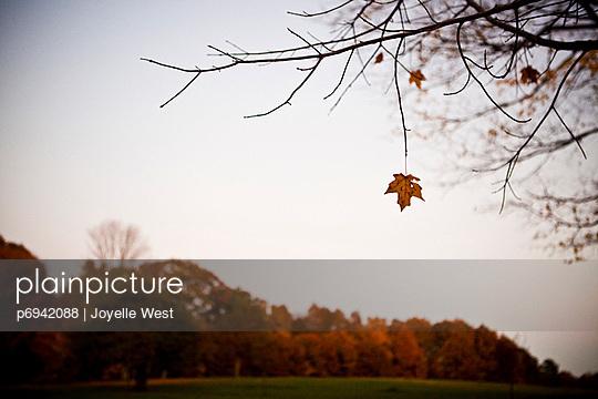 p6942088 von Joyelle West