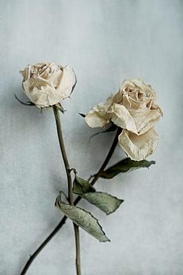 Two roses - p971m911950 by Reilika Landen