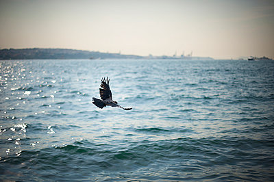 Flying over Bosphorus - p1007m959866 by Tilby Vattard