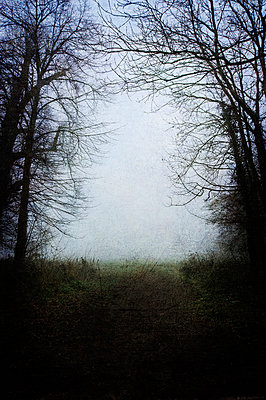 Empty path leading through trees to misty field - p1047m899860 by Sally Mundy