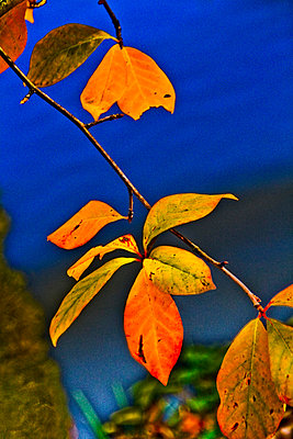 Leaves and blue sky - p8620021 by Michel Gile