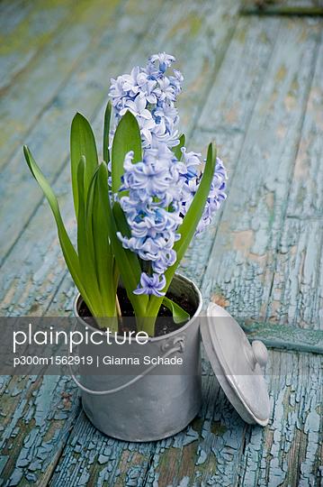 plainpicture - plainpicture p300m1562919 - Flower decoration, hyacinth... - plainpicture/Westend61/Gianna Schade