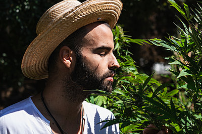 Young male farmer smelling marijuana plant in farm on sunny day - p300m2241051 by NOVELLIMAGE