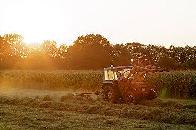 Sweet corn field - p5861218 by Kniel Synnatzschke