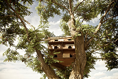 Pigeonry in tree, Cappadocia, Turkey - p586m1010481 by Kniel Synnatzschke