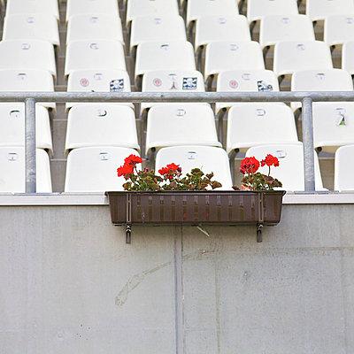 Geranien im Stadion - p6060632 von Iris Friedrich