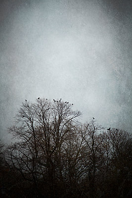 Treetops with Birds  - p1248m1083590 by miguel sobreira