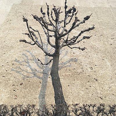Knorriger Baum - p1401m2159051 von Jens Goldbeck