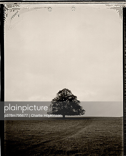 Lone tree in field - p378m795677 by Charlie Hopkinson