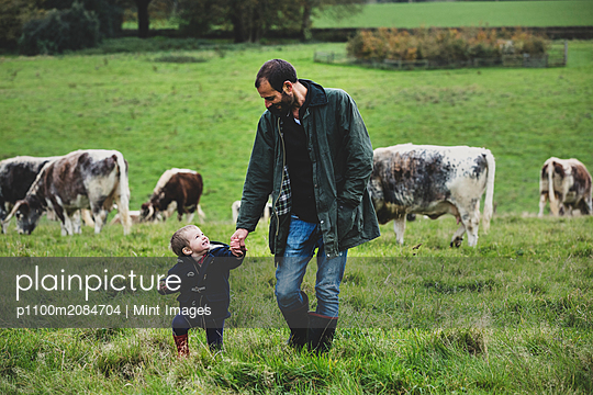 Man and young boy walking on a pasture, with English Longhorn cows in the background. - p1100m2084704 by Mint Images
