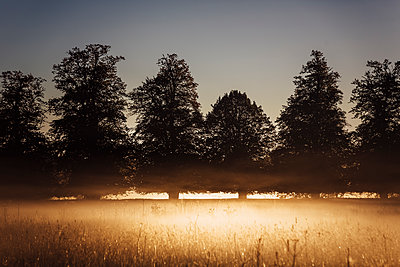 Early morning mist filters the sunlight streaming through nearby trees into flares of light and shade at sunrise. - p1057m2026152 by Stephen Shepherd