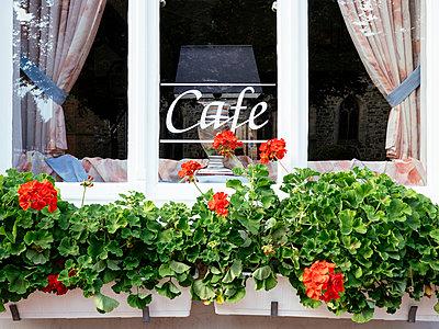 Germany, Lower Saxony, Rinteln, Window of a cafe - p300m1175587 by Harald Walker