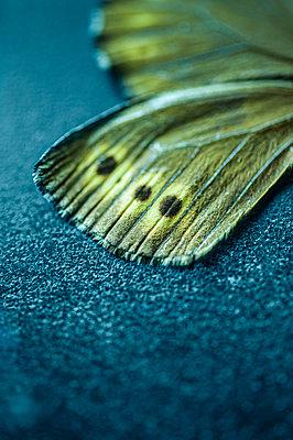 Butterfly - p971m2135244 by Reilika Landen