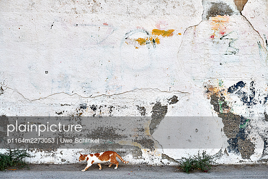 Cat against weathered house wall - p1164m2273053 by Uwe Schinkel