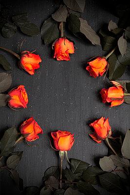Circle of Orange Roses  - p1248m2193189 by miguel sobreira