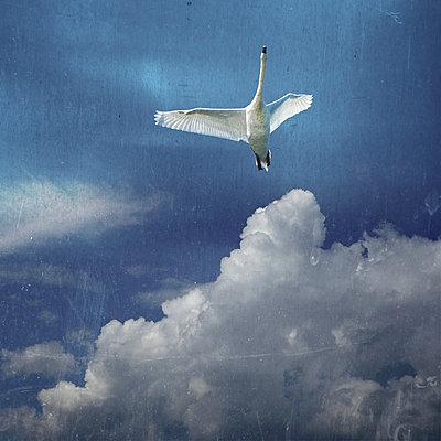 The Angel - p1633m2209087 by Bernd Webler