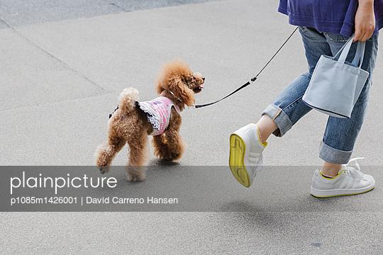 Pudel an der Leine  - p1085m1426001 von David Carreno Hansen