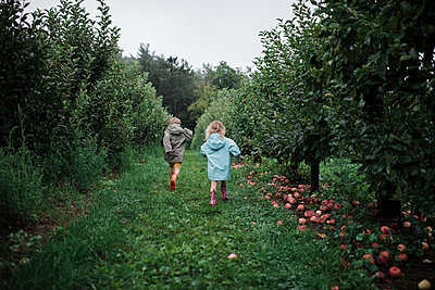Rear view of playful siblings running amidst fruit trees at apple orchard - p1166m2024819 by Cavan Images