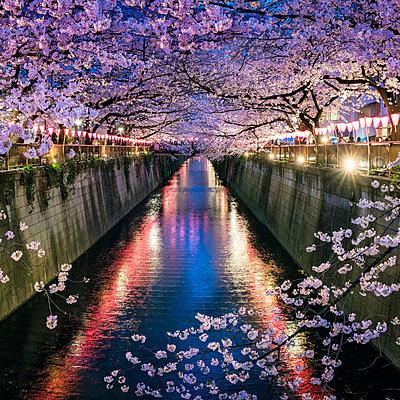 Nakameguro Sakura Festival, Tokyo, Japan - p651m2006262 by Jan Christopher Becke