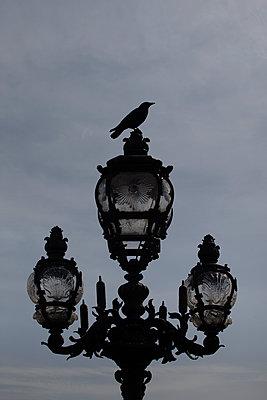 Crow - p1028m1562175 von Jean Marmeisse
