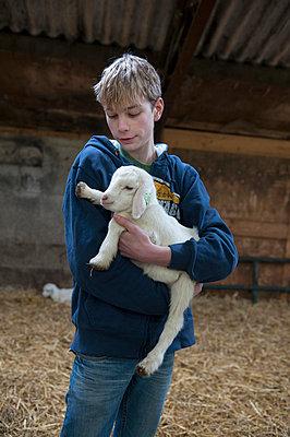 Boy holding lamb - p896m835946 by Sabine Joosten