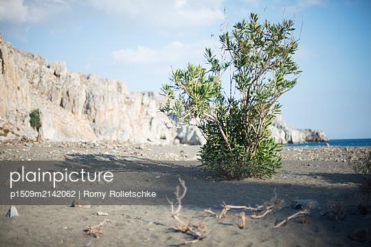 p1509m2142062 by Romy Rolletschke