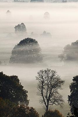 View of tree in fog - p300m660143f by Martin Siepmann