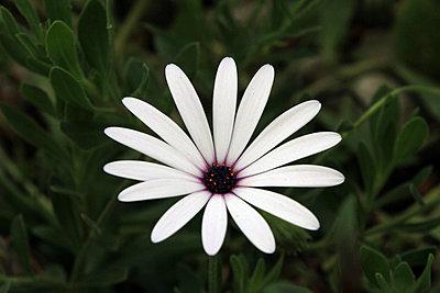 Blume - p977m1040488 von Sandrine Pic