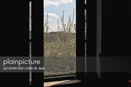 Blick aus dem Fenster - p212m901003 von Edith M. Balk