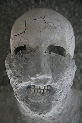 Pompeii skull - p1072m899468 by Michael Steel