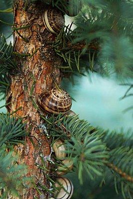 Schnecken an einem Baumstamm - p473m923095f von STOCK4B-RF