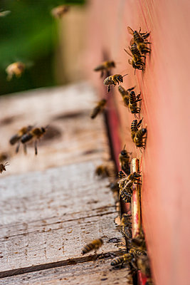 Honey bees - p300m1053002f by Tom Chance