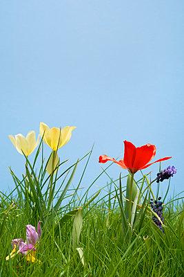 Flowers in spring - p1132m925554 by Mischa Keijser